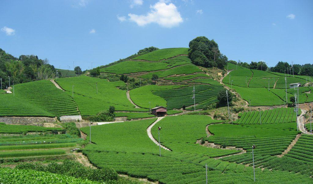 Discover the benefits of Uji-Green Tea ②